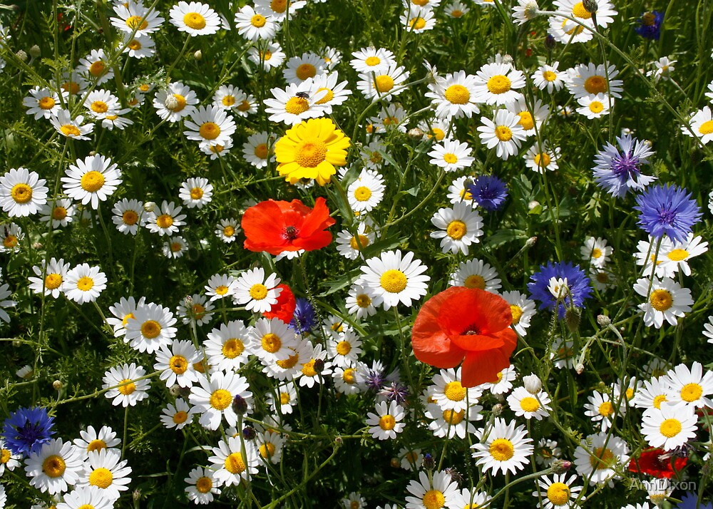 A Field of Wildflowers by AnnDixon