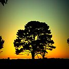 Tree at Dusk by PerkyBeans