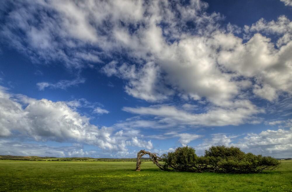 Windswept by Ladyshark