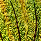 leaf abstract by Manon Boily