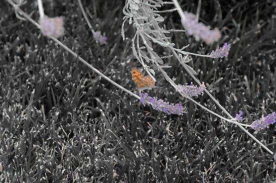 Lonely Butterfly by Sotiris Filippou