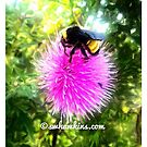 Bumble Bee On a Oklahoma Purple Thistle by Scott Hawkins