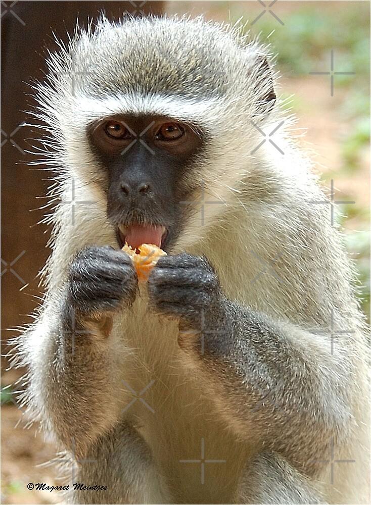 VERY NICE! Vervet Monkey, (CERCOPITHECUS PYGERYTHRUS), Blou Aap by Magriet Meintjes