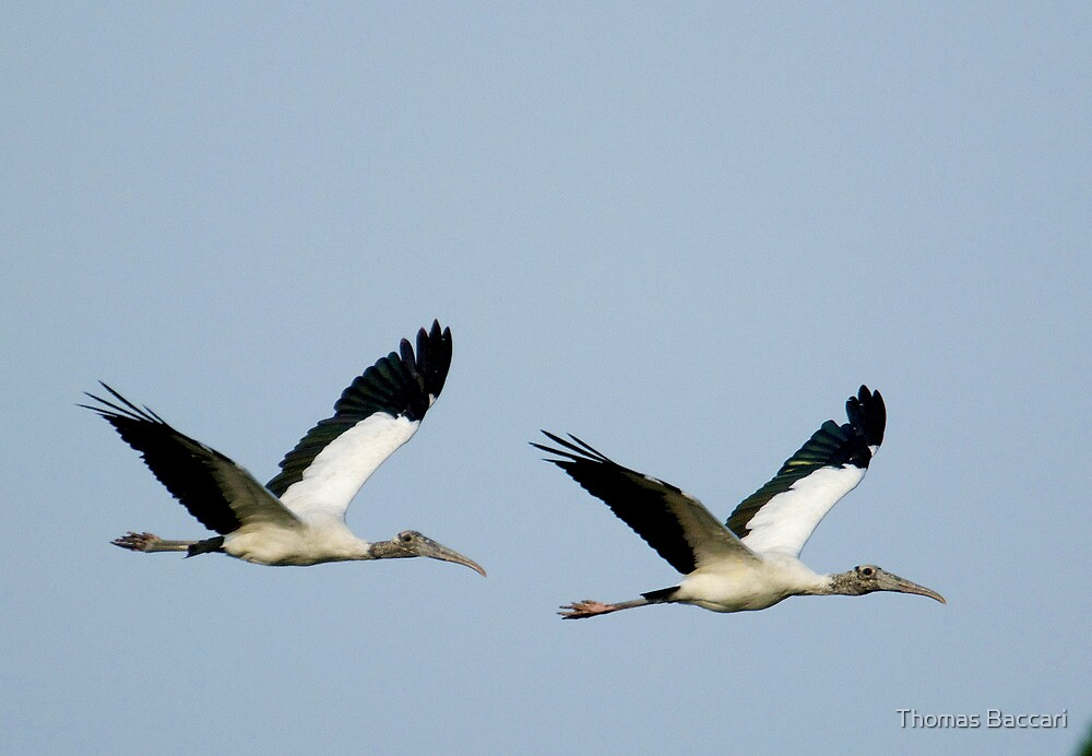 TWIN STORKS by TJ Baccari Photography