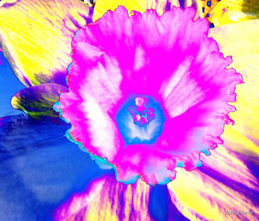 Fluorescent Daffodil  by Shawna Rowe
