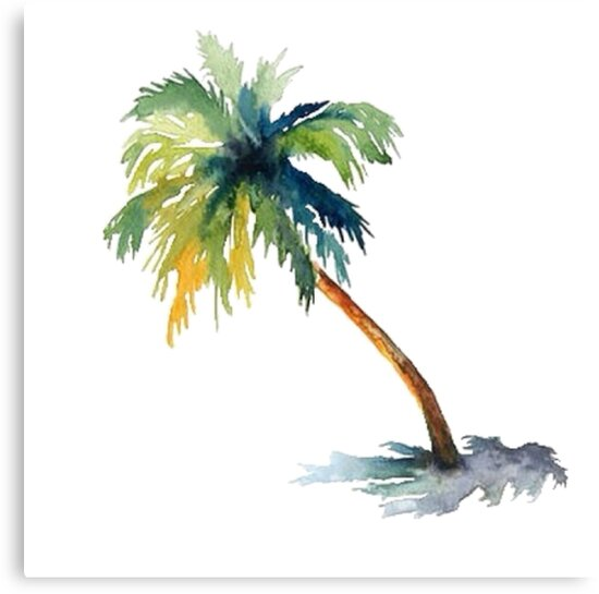 watercolor palm tree canvas prints by shannonfraney redbubble