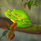 Green Tree Frog  by owen  pointon