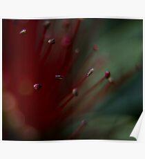 Lava Bloom Poster
