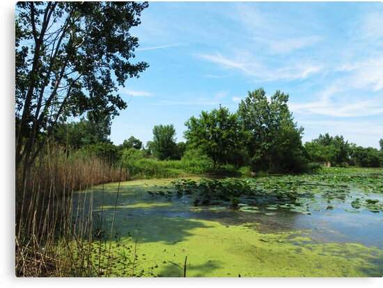 East Harbor State Park - Algae Bloom by Shawna Rowe