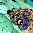 Beautiful butterfly by kutekatgurl