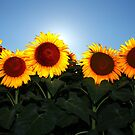 Very Sunny Sunflower by Lisa Holmgreen Porier