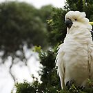 Cockatoo portrait by Jack Doherty