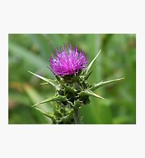 MilkThistle Flower Photographic Print