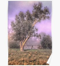 Misty Morn - Jingelic NSW - Upper Murray  - The HDR Experience Poster