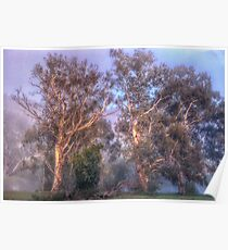 River Gums -  Upper Murray River - Jingelic NSW - The HDR Experience Poster