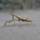 Mantis by volkandalyan