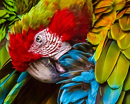 Feathers by Janice Carter