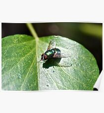 A Green Fly (macro) Poster