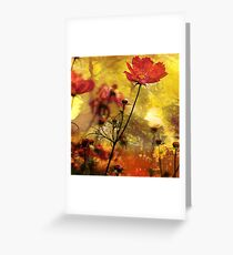 Cosmea  (Abstract Red) Greeting Card