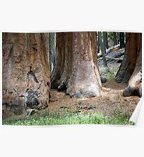 Yosemite Giants Poster