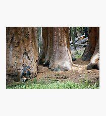 Yosemite Giants Photographic Print