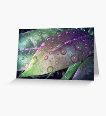 Raindrops on a leaf Greeting Card