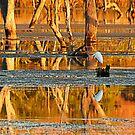 Reflections on Lake Kununurra by JuliaKHarwood