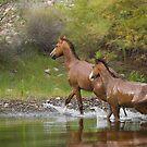 Running Wild  by Sue  Cullumber
