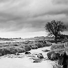Stormy Moors by kernuak