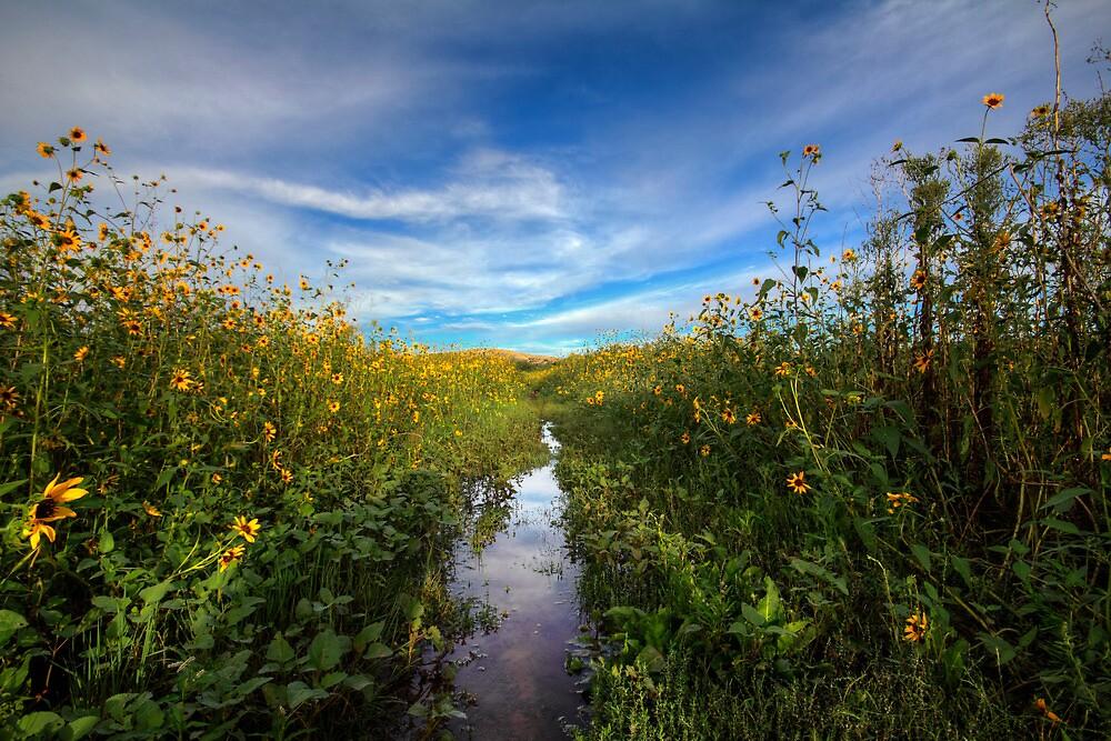 Sunflower Stream by Bob Larson