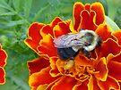 Full of Pollen by FrankieCat