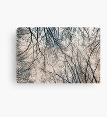 Branches Infrared Nature Canvas Print