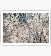 Branches Infrared Nature Sticker