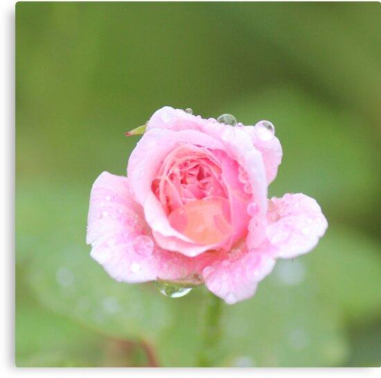 Wet by Bob Hardy