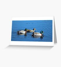 Three Ducks Greeting Card