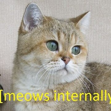 Intense cat de Canyounotqueenb