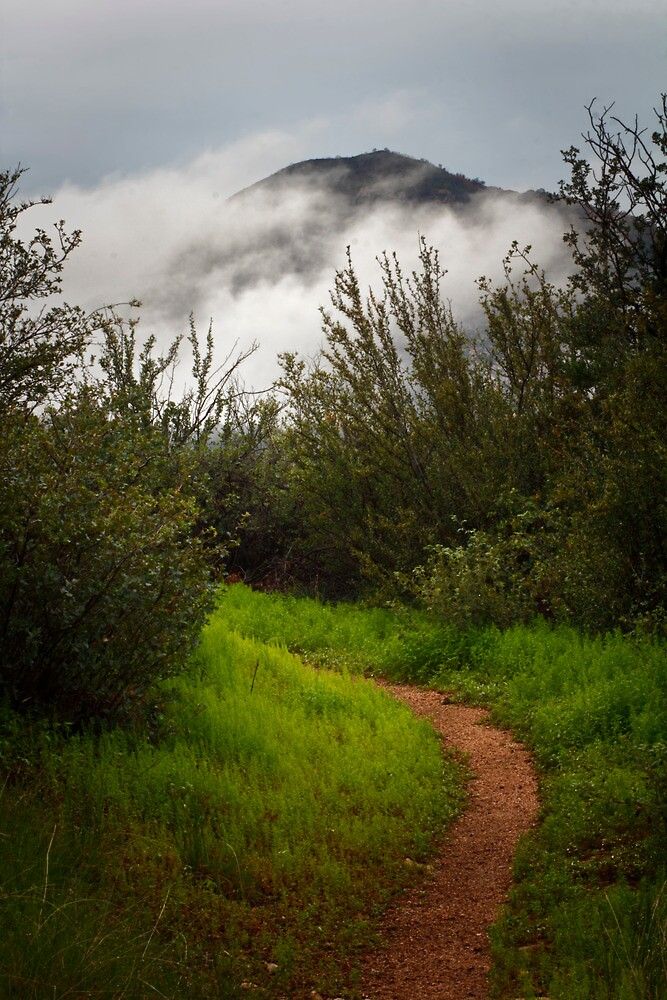 Pathway To The Clouds by Bob Larson