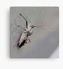 Wheel Bug (Spined Assassin Bug) Canvas Print e8c26396eda64