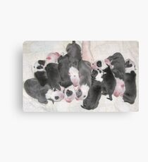 New Puppies For Laurie and Viv ~ Canvas Print