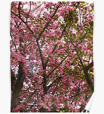 Before the apples comes the pink blossoms Poster
