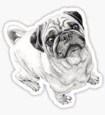 Seymour Sticker