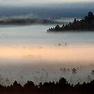 3.9.2013: Morning in Torronsuo National Park I by Petri Volanen