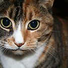 pbbyc - Belle - Boss Cat by pbbyc