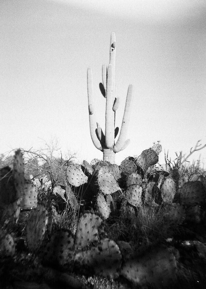 Saguaro Cactus Holga Photo by strayfoto