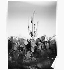 Saguaro Cactus Holga Photo Poster
