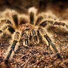 Arachnid by Heather Haderly
