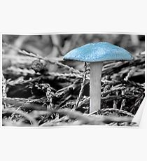 Clitosybe Odora, Aniseed Toadstool Poster