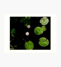 Water Lillies on Dark Water Art Print