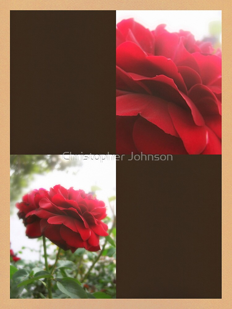 Red Rose with Light 1 Blank Q3F0 by Christopher Johnson