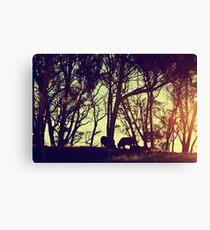 Sunset Cattle  Canvas Print